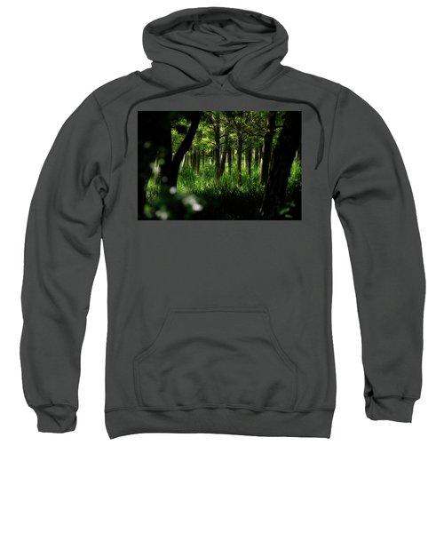A Walk In The Woods Sweatshirt