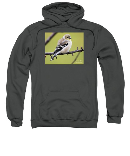 American Goldfinch Sweatshirt