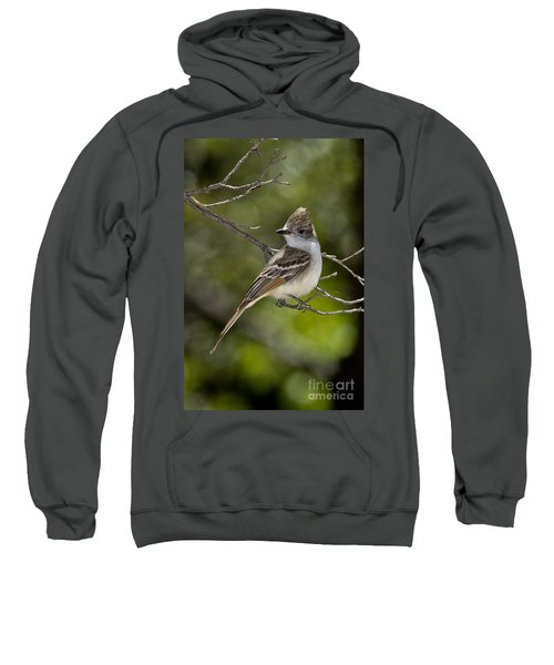 Ash-throated Flycatcher Sweatshirt by Anthony Mercieca