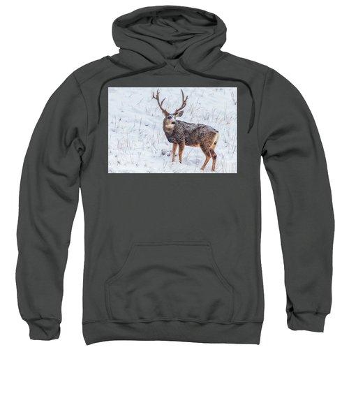 Atypical Buck Sweatshirt