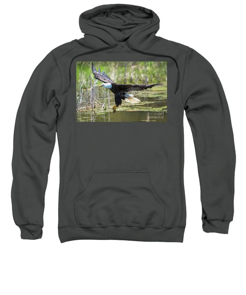 Bald Eagle-3175 Sweatshirt