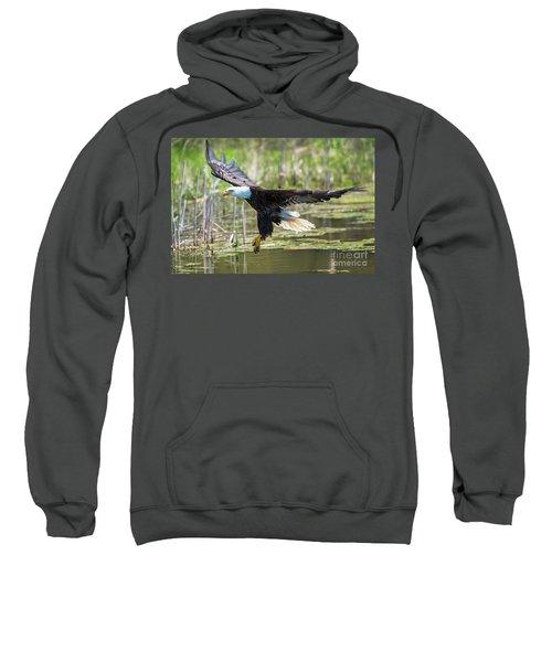 Bald Eagle-3175 Sweatshirt