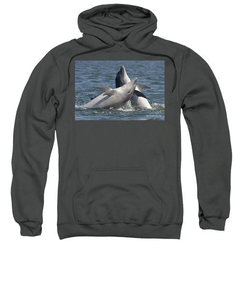 Bottlenose Dolphins  - Scotland  #15 Sweatshirt