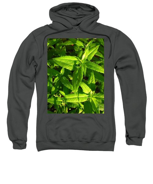 Covering Sweatshirt