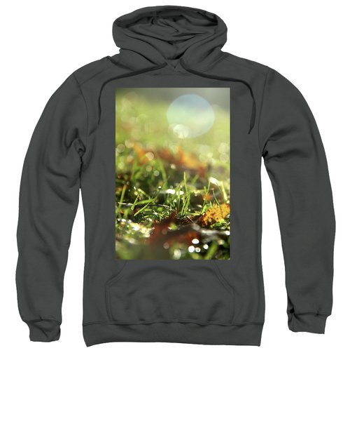 Close-up Of Dry Leaves On Grass, In A Sunny, Humid Autumn Morning Sweatshirt