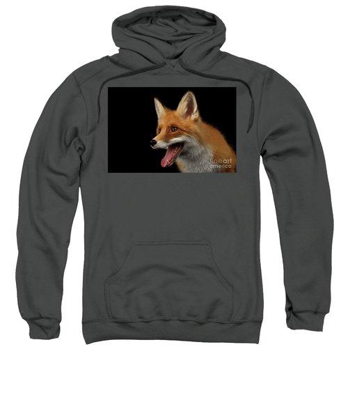 Closeup Portrait Of Smiled Red Fox Isolated On Black  Sweatshirt