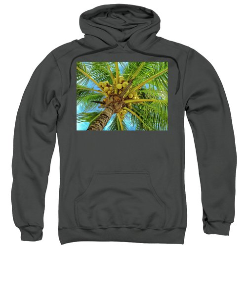 Coconuts In Tree Sweatshirt