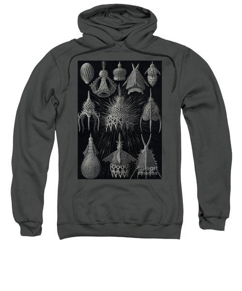 Cyrtoidea Sweatshirt