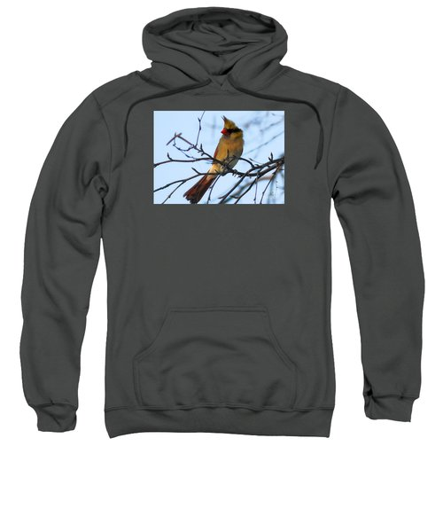 Sweatshirt featuring the photograph Female Northern Cardinal by Ricky L Jones