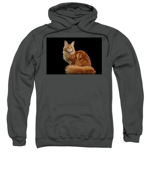 Ginger Maine Coon Cat Isolated On Black Background Sweatshirt