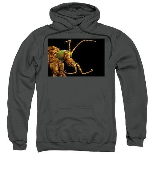 Green Eyed Crane Fly Sweatshirt