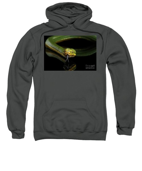 Green Tree Python. Morelia Viridis. Isolated Black Background Sweatshirt