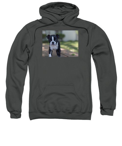 Sweatshirt featuring the photograph Harley As A Puppy by Lora Lee Chapman