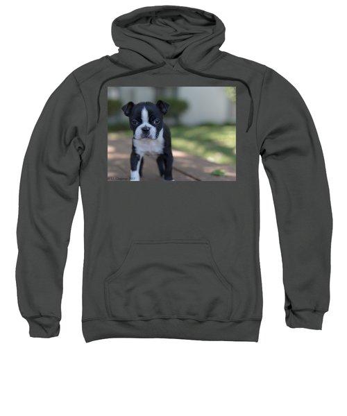 Harley As A Puppy Sweatshirt