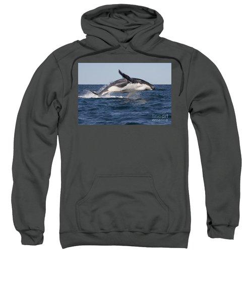 Humpback Whale Calf Breaching Sweatshirt