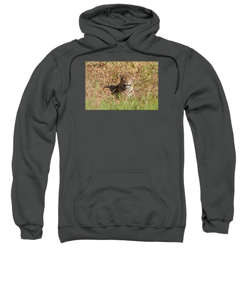 Jaguar Watching Sweatshirt