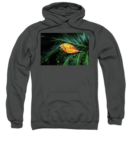 Life Cycle Still Life Sweatshirt