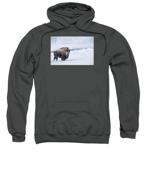 Lone Bison Sweatshirt