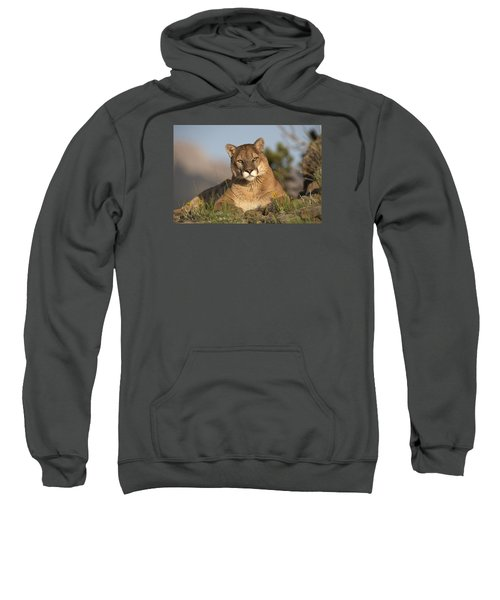 Mountain Lion Portrait North America Sweatshirt