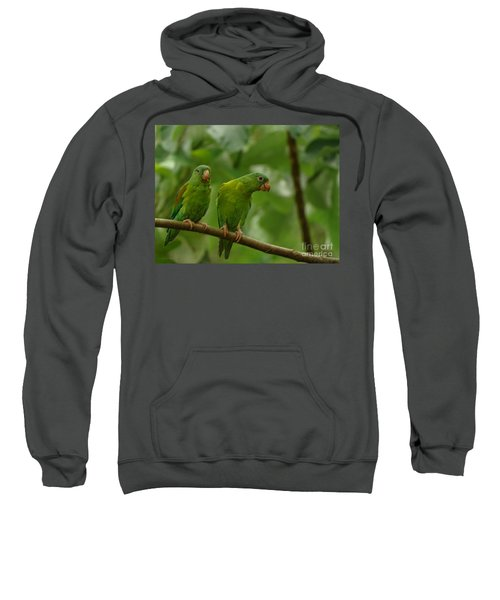 Orange -chinned Parakeets  Sweatshirt