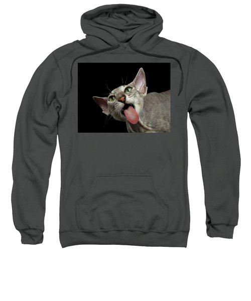 Peterbald Sphynx Cat On Black Background Sweatshirt