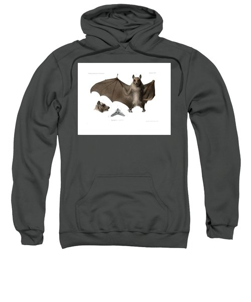 Sweatshirt featuring the drawing Peters's Epauletted Fruit Bat by Hugo Troschel