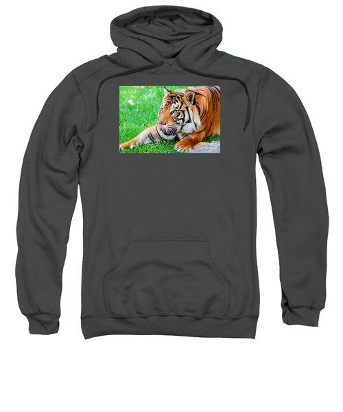 Pre-pounce Tiger Sweatshirt
