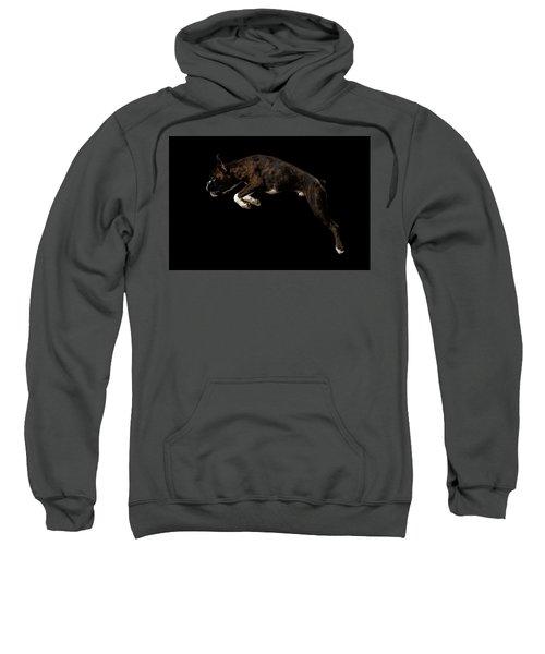 Purebred Boxer Dog Isolated On Black Background Sweatshirt