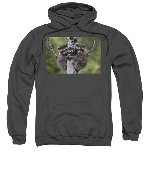 Raccoon Two Babies Climbing Tree North Sweatshirt