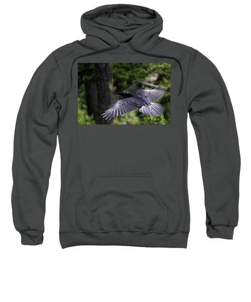 Raven Flight Sweatshirt