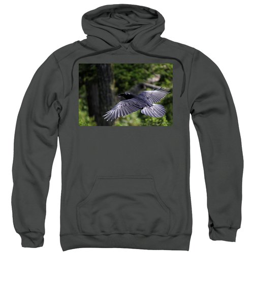 Raven Flight Sweatshirt