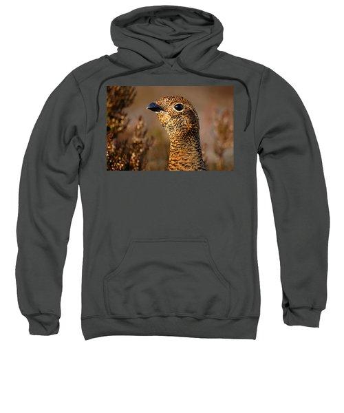 Red Grouse  Sweatshirt