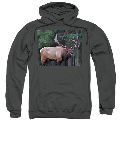 Royal Roosevelt Bull Elk Sweatshirt
