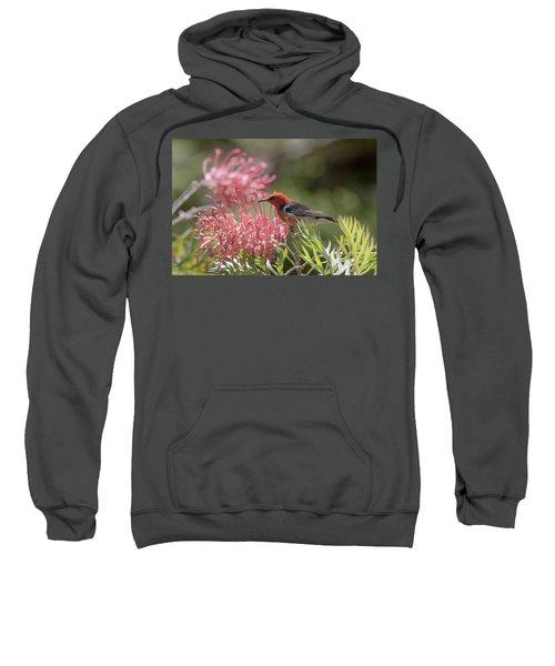 Scarlet Honeyeater Sweatshirt