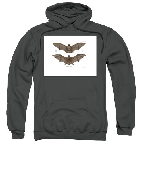 Sweatshirt featuring the drawing Sundevall's Roundleaf Bat by A Andorff