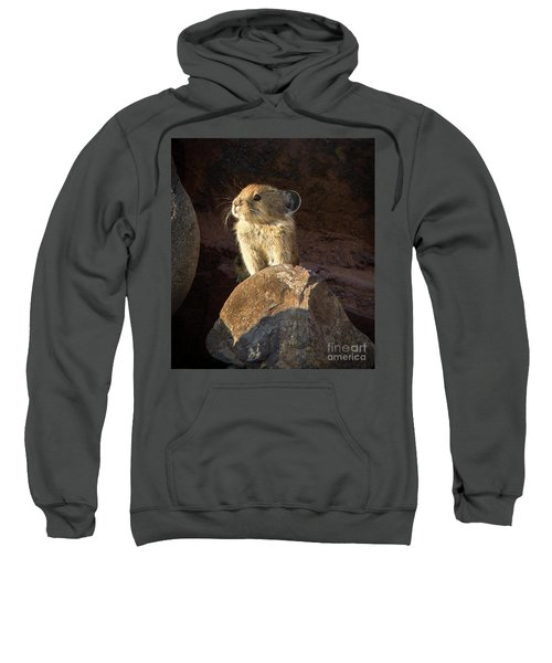 The Coast Is Clear Wildlife Photography By Kaylyn Franks Sweatshirt
