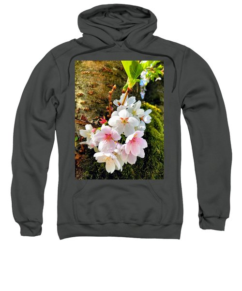 White Apple Blossom In Spring Sweatshirt