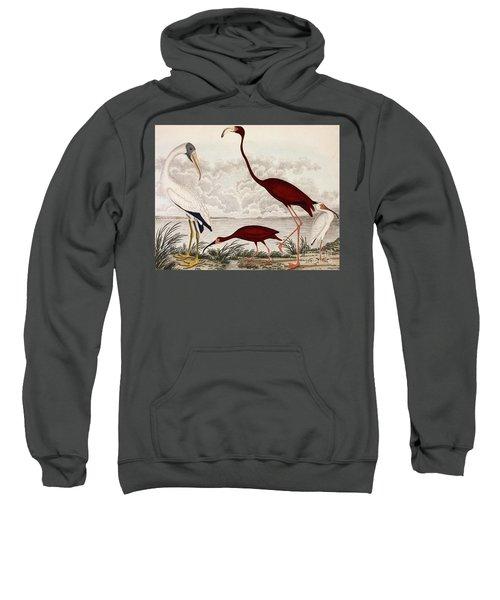 Wood Ibis, Scarlet Flamingo, White Ibis Sweatshirt