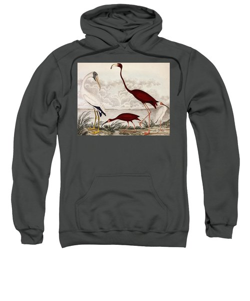 Wood Ibis, Scarlet Flamingo, White Ibis Sweatshirt