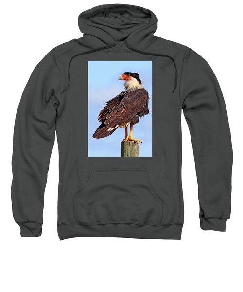 Crested Caracara Sweatshirt