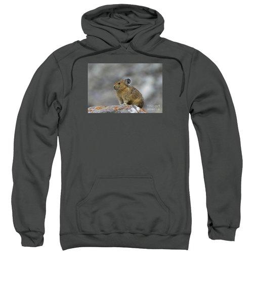 151221p238 Sweatshirt