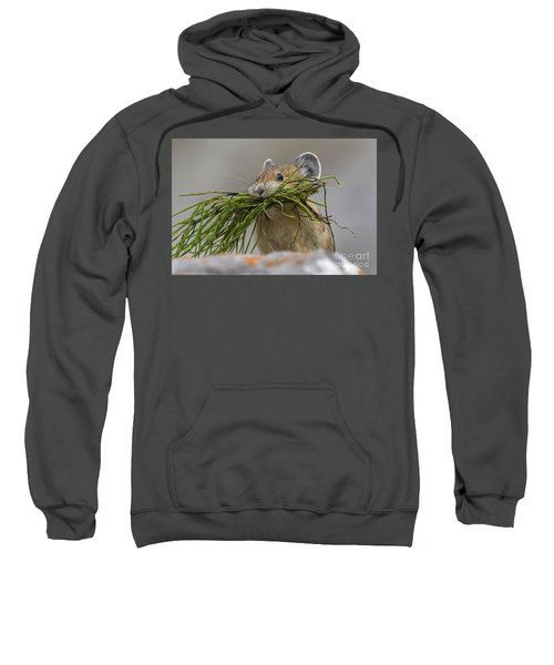 Pika With A Mouthful  Sweatshirt