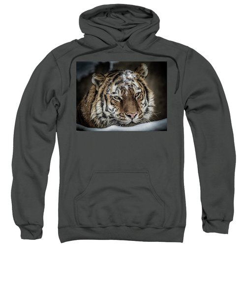 Amur Tiger Sweatshirt