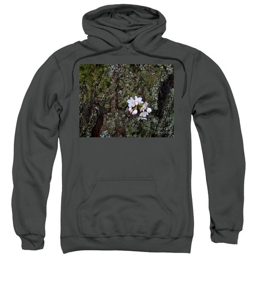 Sweatshirt featuring the photograph Cherry Blossoms by Tari Simmons