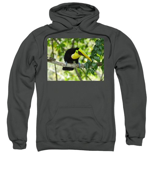 Chestnut-mandibled Toucan Sweatshirt