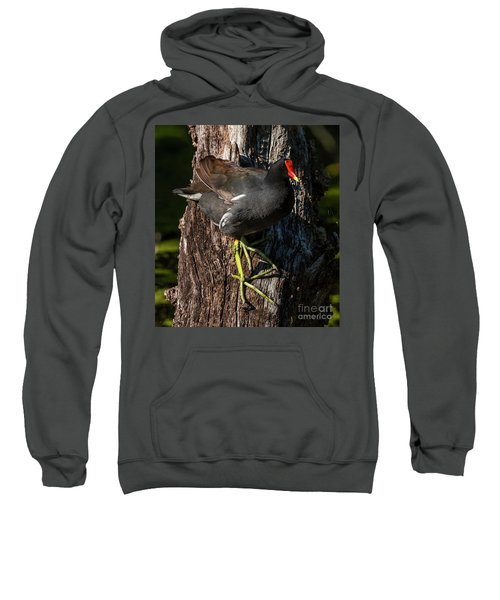 Moorhen Sweatshirt