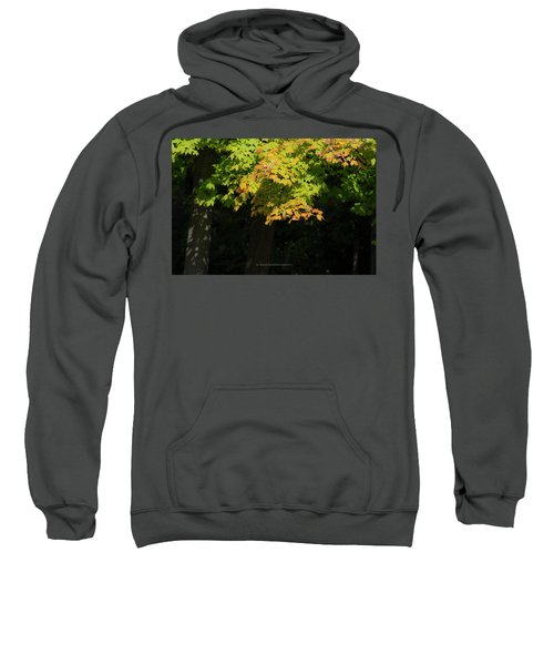 October Colors Sweatshirt