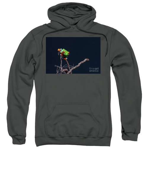 Red Eyed Tree Frog Sweatshirt