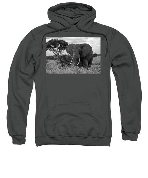 The Old Bull Sweatshirt