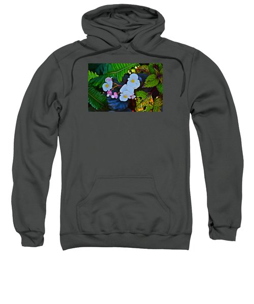 2015 Early September At The Garden Begonias Sweatshirt